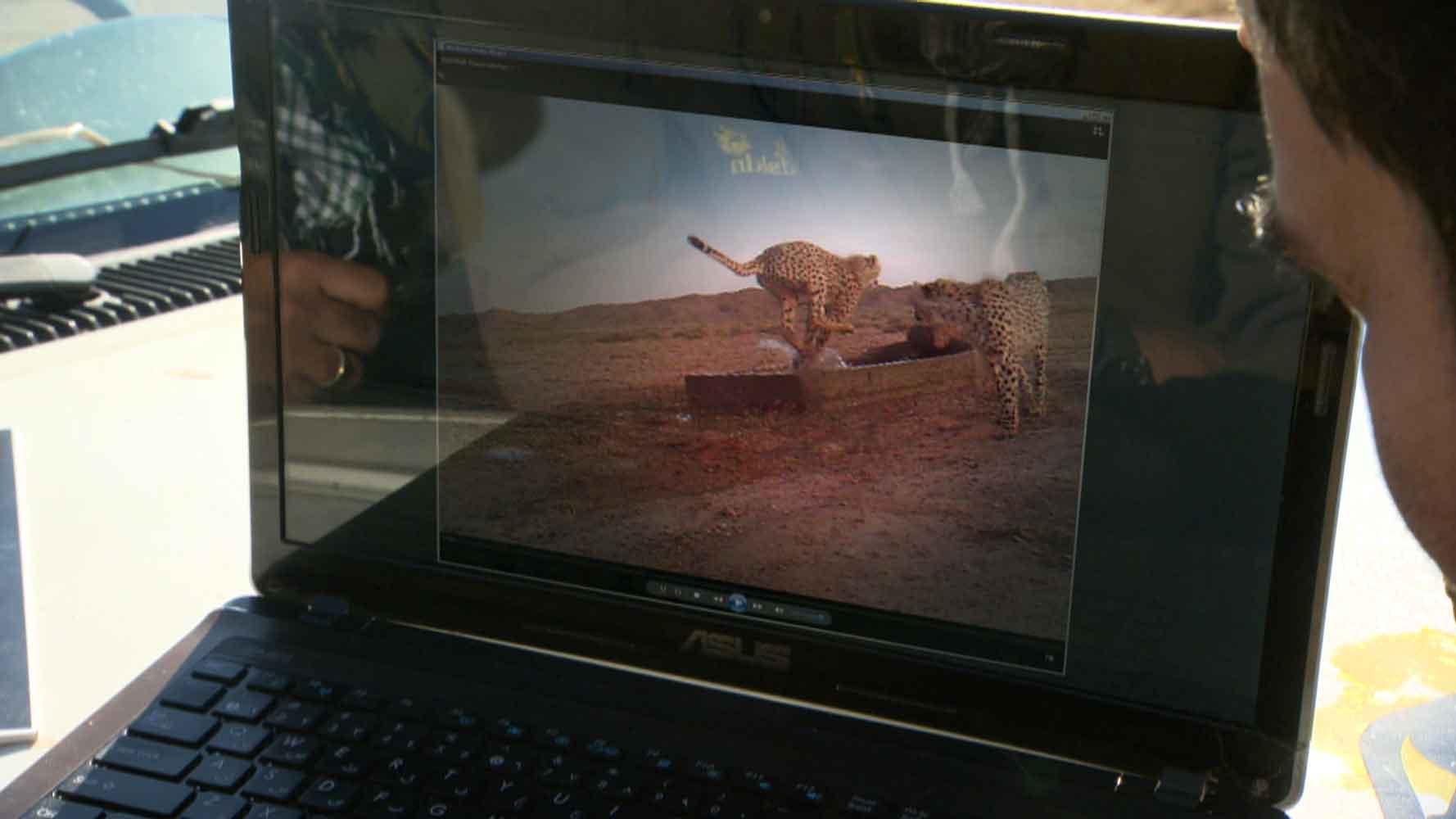 Phantome der Wüste – Asiens letzte Geparde
