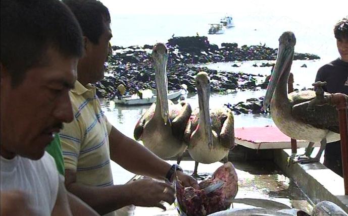 Kampf um Galapagos