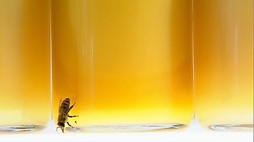 Flüssiges Gold – Eine Geschichte des Honigs